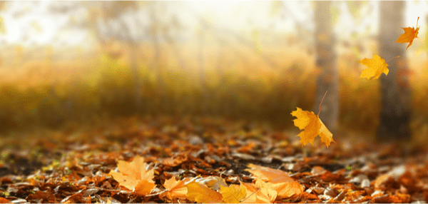 Aménager son extérieur en automne